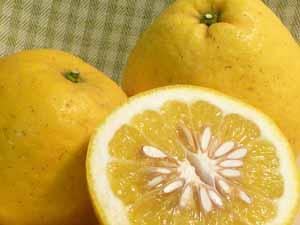 ばん かん 柑橘